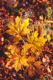 温暖和充满活力的秋天背景,来通过wi的太阳光 图库摄影