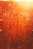 温暖和充满活力的秋天背景,来通过wi的太阳光 免版税库存照片