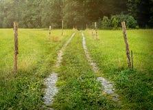 温暖和新鲜的跳动轨道通过有ligh光芒的草甸  库存图片