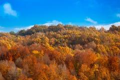 温暖和舒适森林 免版税库存图片