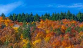 温暖和舒适森林 库存图片