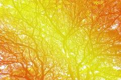 温暖地发光通过树分支的秋天太阳  免版税库存图片