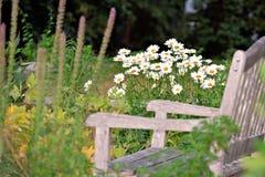 温暖无忧无虑的概念雏菊的夏天 库存照片