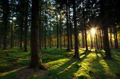 温暖的光束在秋天森林里 库存图片