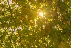 温暖的太阳和它的光芒通过秋叶 库存图片