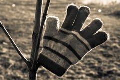 温暖的手套 库存图片
