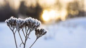 温暖的日落在冷的冬天 免版税库存照片
