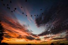 温暖的日落-飞行的鸟在晚上回家 免版税库存图片
