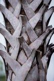 温暖的木纹理 免版税库存照片