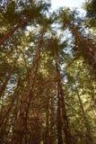 温暖的树 免版税图库摄影