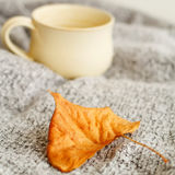 温暖的格子花呢披肩和咖啡的图片或茶在白色backg 免版税图库摄影