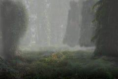 温暖的森林 库存图片