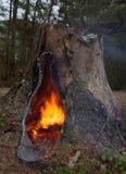 温暖的火 库存图片