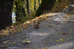 温暖的秋天天在美丽的自然公园 免版税库存图片