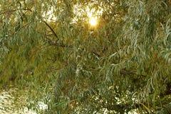 温暖的秋天太阳在湖上发光 免版税图库摄影