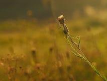 温暖的秋天日 库存照片
