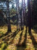 温暖的秋天风景在一个森林里,当太阳熔铸美好的光通过薄雾和树 免版税图库摄影
