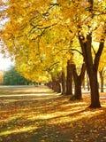 温暖的秋天 库存图片