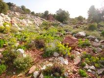 温暖的美好的山风景 在雾的山,绿色树,在石头中的夏天草 旅行在山 免版税库存图片
