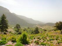 温暖的美好的山风景 在雾的山,绿色树,在石头中的夏天草 旅行在山 库存照片