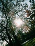 温暖的阳光 图库摄影