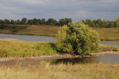 温暖的风景河岸 阳光在一多云天 偏僻的结构树 图库摄影