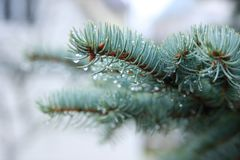 温暖的12月在俄罗斯 免版税库存图片