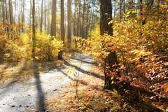 温暖的10月天在森林里 免版税图库摄影