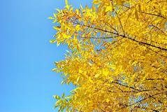 温暖秋天太阳发光 免版税图库摄影