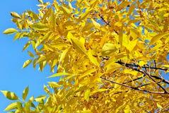 温暖秋天太阳发光 免版税库存照片