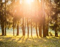 温暖,理想主义的夏天视图日落 免版税库存图片
