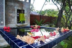温泉中心,花在马尔代夫 图库摄影