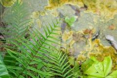 温泉和水晶水池 库存照片