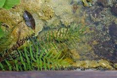 温泉和水晶水池 免版税库存照片