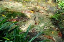 温泉和水晶水池 图库摄影