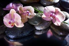 温泉小卵石和桃红色兰花 库存图片