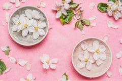 温泉或健康桃红色背景用开花和水滚保龄球与白花,顶视图 春天开花背景 免版税库存图片