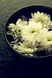 温泉放松概念 在碗的美丽的白色温泉花在水中 库存照片