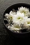 温泉放松概念 在碗的美丽的白色温泉花在水中 图库摄影