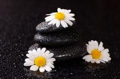 温泉的石头与水下落和春黄菊 图库摄影