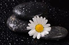 温泉的石头与水下落和春黄菊 库存图片