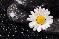 温泉的石头与水下落和春黄菊 免版税库存照片