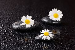 温泉的石头与水下落和春黄菊 免版税库存图片