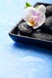 温泉石头和兰花在湿蓝色背景开花 库存照片