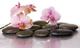 温泉石头和兰花花和黑石头 库存图片
