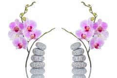 温泉结构的在白色背景和两朵蝴蝶兰花与反射隔绝的按摩石头 免版税库存图片