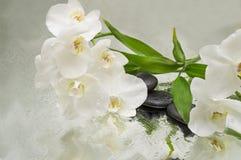 温泉背景-兰花染黑石头和竹子在水 库存图片