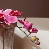 温泉装饰概念 免版税库存照片