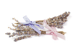 温泉辅助部件,在白色淡紫色隔绝的两束 免版税库存照片