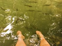 温泉鱼在瀑布的脚,放松一只脚 免版税库存照片